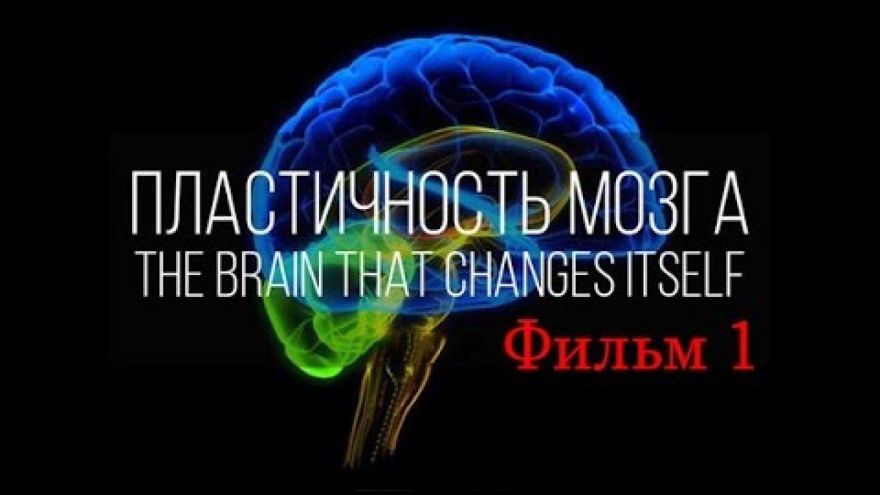 Мозг изменяющий себя сам (Нейропластичность Мозга)