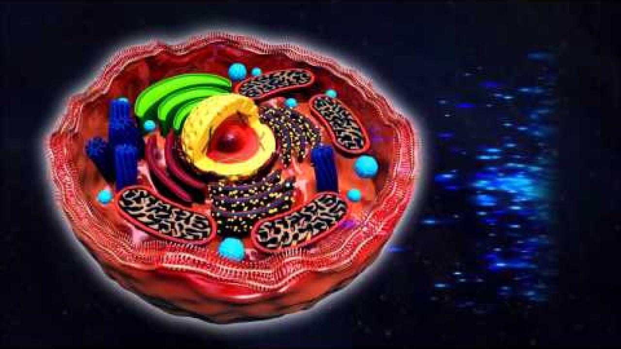 Причина болезни - морфологическое изменение тканей организма человека
